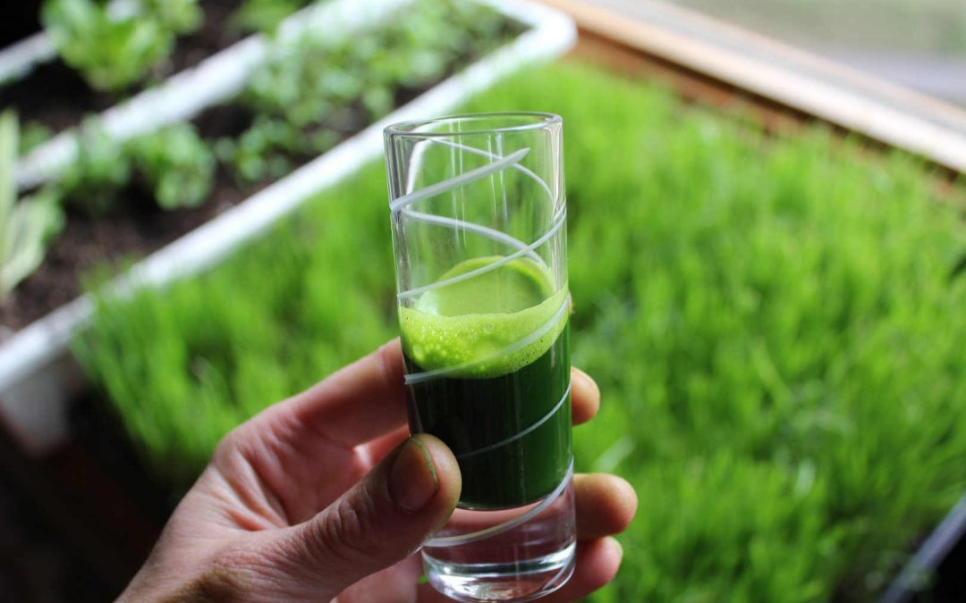Superfood Decoded – Wheatgrass